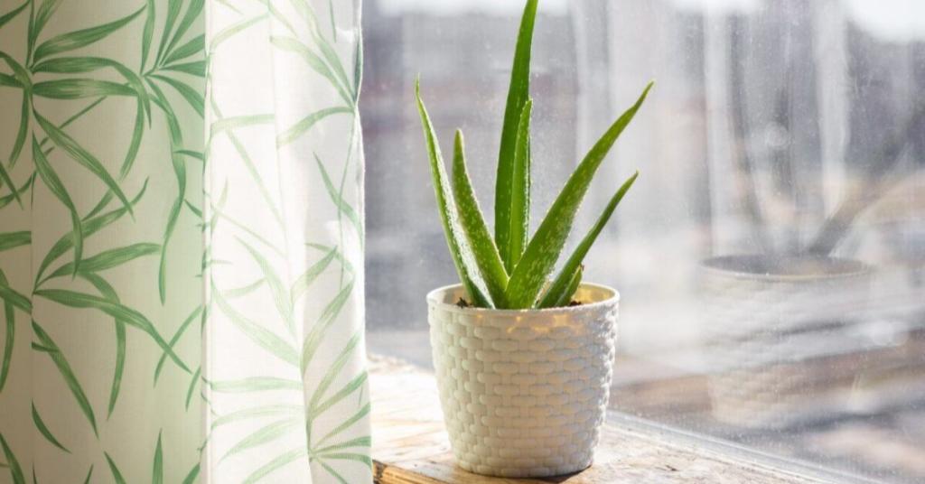 5 loại cây xanh mà bạn nên trồng trong phòng ngủ vì có lợi cho sức khỏe